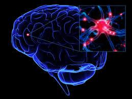 creier si neuron